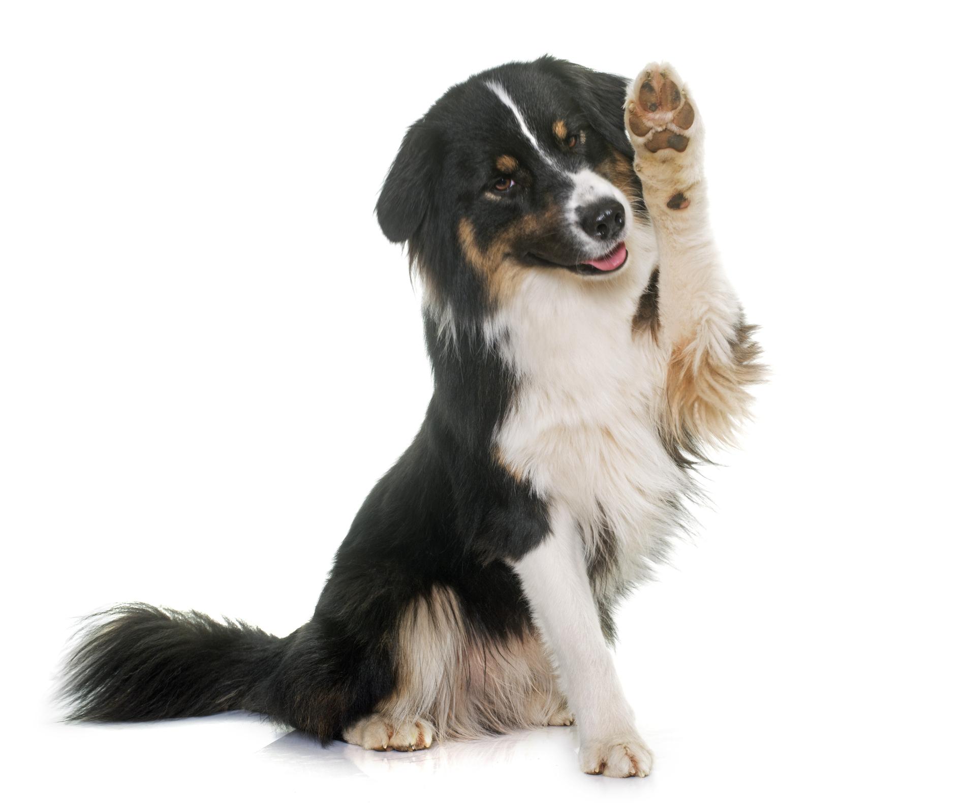 Dog Aggression Training Adelaide